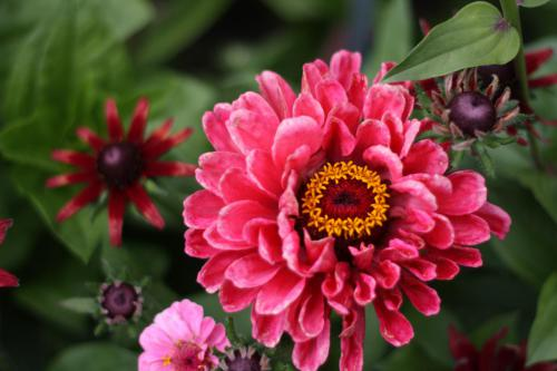 HS_Blume im botanischen Garten