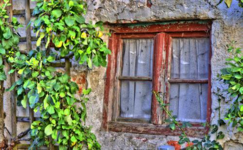 Wi_Das Fenster zum Hof