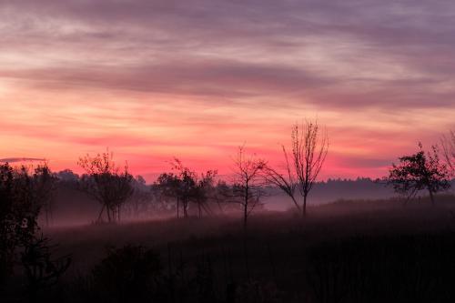 man sieht in der Abenddämmerung Landschaft mit Wiese und Bäumen in Rot gehalten
