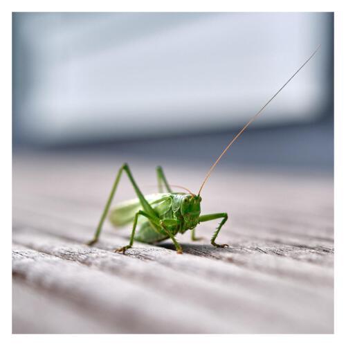 001 Insekten for.mike