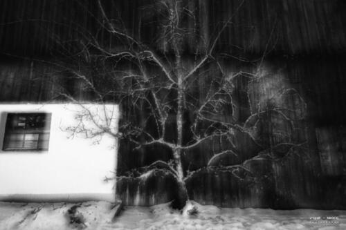 19 abstrakte Natur-for.mike