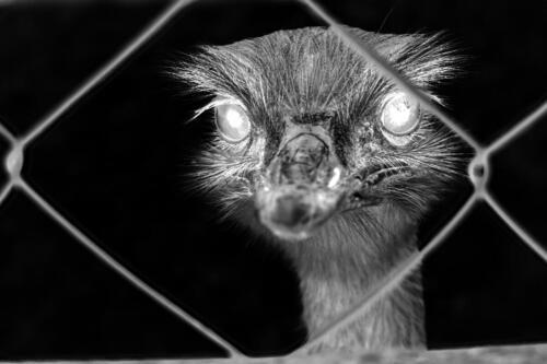 Big EMU is watching me 01 sw umkehr