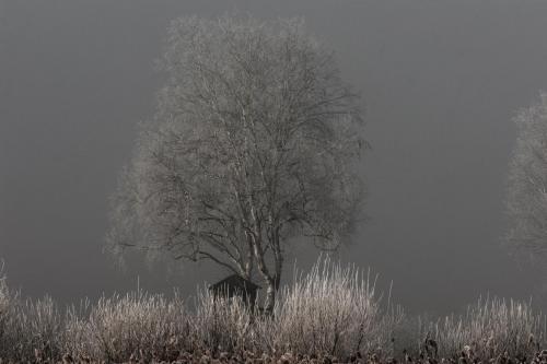 Birke mit Hochsitz im Winter 01