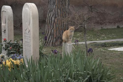 Katze auf dem Friedhof