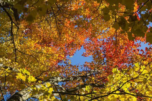 Herbstfarben 01-Hans