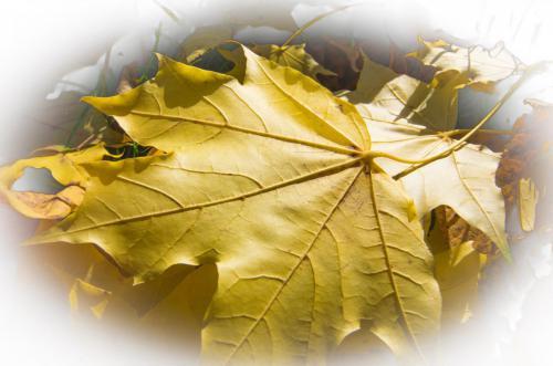 Herbstleuchten-Manuela