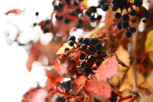 HvS Herbstfarben