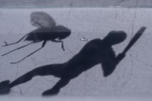 Ingrid Röhrner Insektensterben