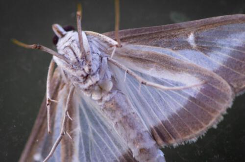 ML Insekten-2