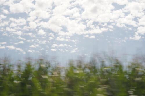 Maisfeld im Vorbeifahren, blauer Himmel mit Wolken dahinter