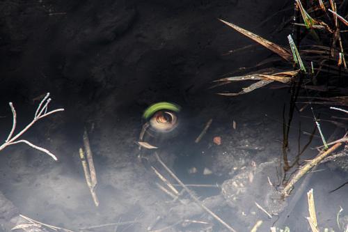 Schnecke gefangen im Strudel 01 hdr