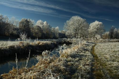 Winter, Rote Nasen, Esel (5)