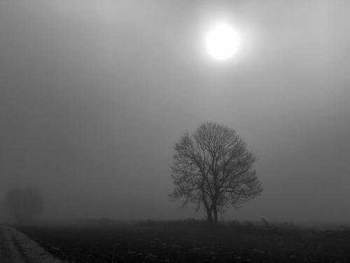 Winter (1 von 1)