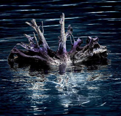 Wurzelteller eines Baumes im Wasser 01