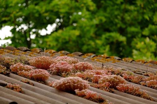 df Dachverkleidung (1 von 1)