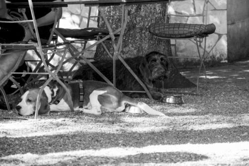 dh Hunde-im-Biergarten 01 sw
